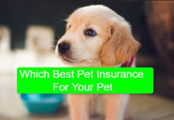 Which Best Pet Insurance For Your Pet